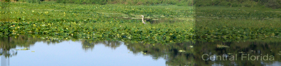 Image of river with bird sitting on lillypads